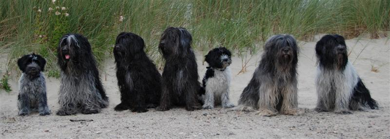 Sandy group