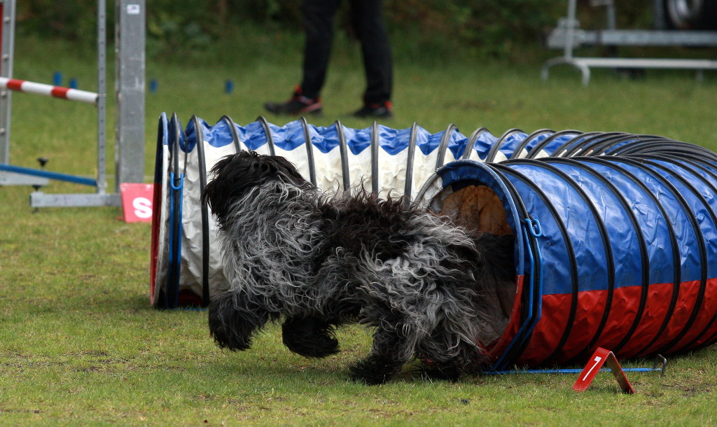 Schapendoes Agility tunnels